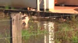 Bewoners Krishnasinghproject Welgedacht B met de handen in het haar vanwege zware wateroverlast...